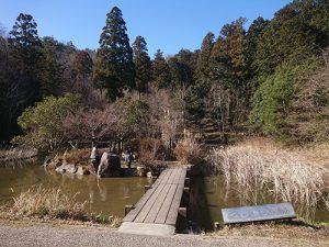 牟礼山 しょうぶ池